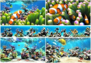 Sim Aquarium 3.7 Build 57 Premium